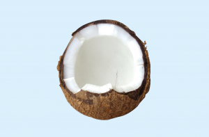 Is the coconut a nut, a seed or a fruit?