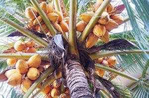 Kokosolie voor je haar: wat kan het allemaal voor je doen?
