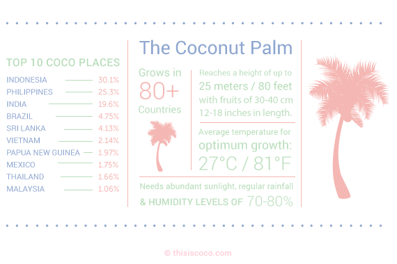 Top 10 producers of coconuts in the world
