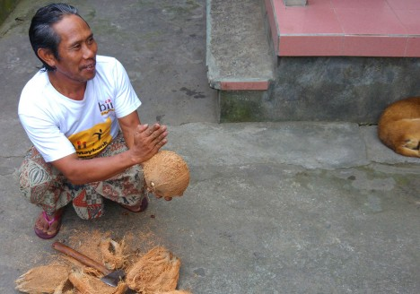 Balinese man removing the husk from a coconut