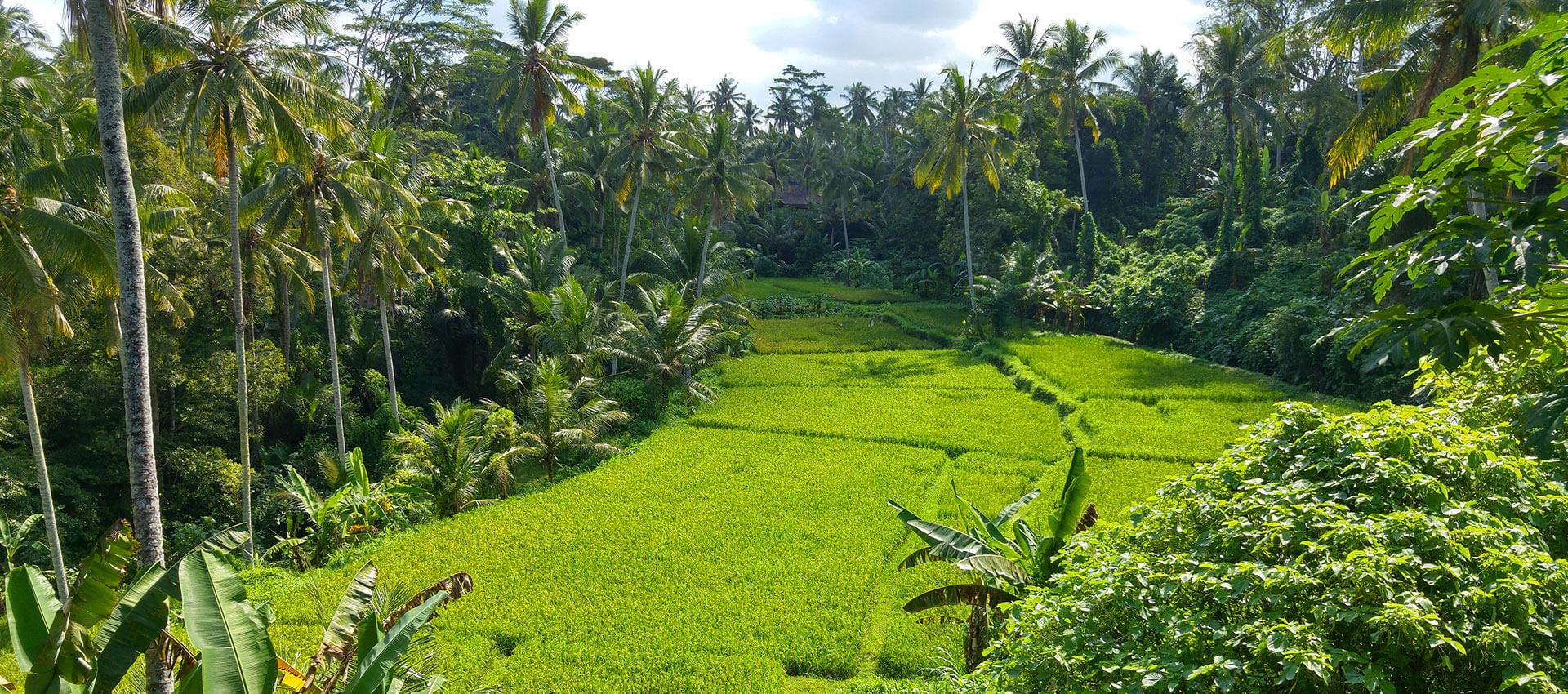 Bali Tegalalang
