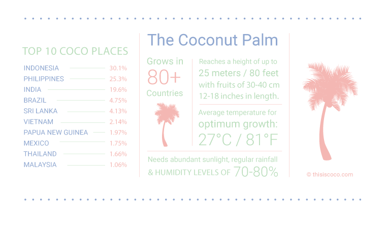 Coconut products infograph palm