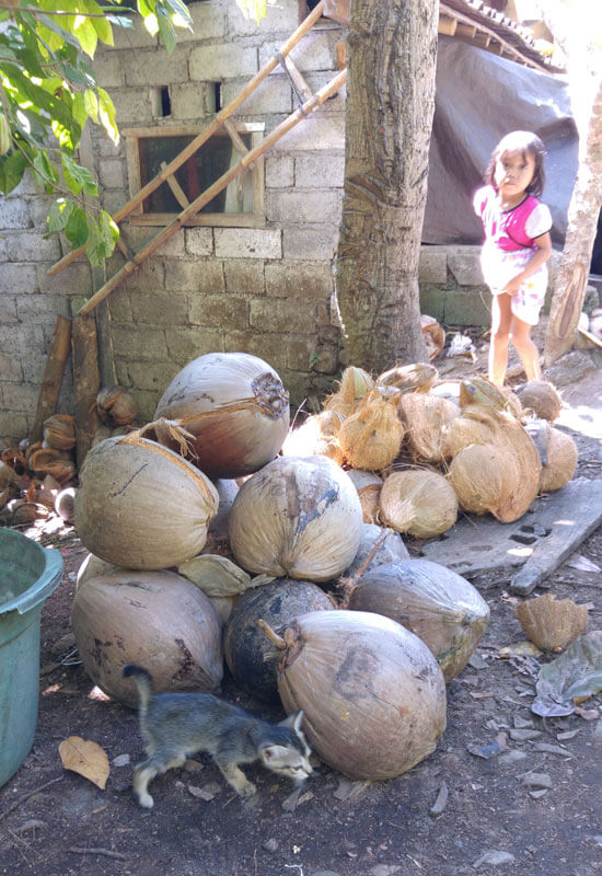Coconuts with husk and coconuts with shell