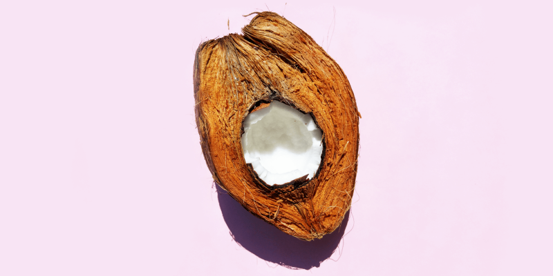 Is the coconut a nut or a fruit?