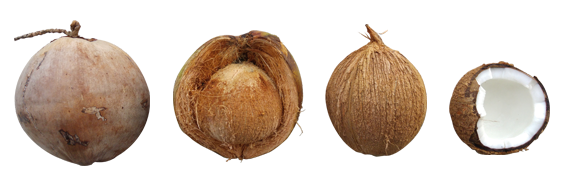 Can you eat coconut with a tree nut allergy?