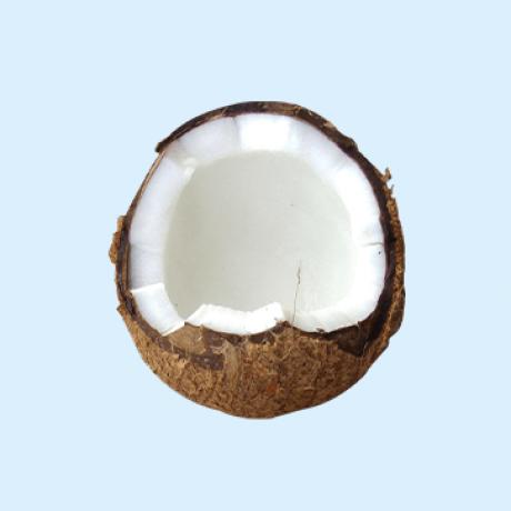 Coconut Queendom - This Is Coco